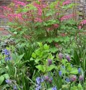 Tuinbeplanting Paars-blauwe lenteborder