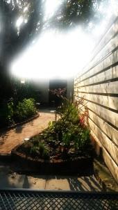 Reusltaat : prachtige lichtval in smalle lange tuin met kastanje