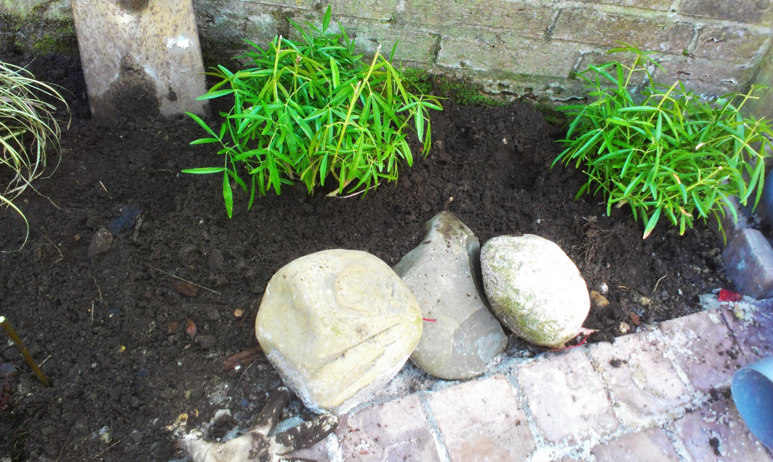 Rotsjes bij de geul naar de tuinwadi