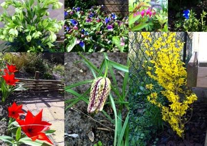 Lente in de wilgenborders tuin